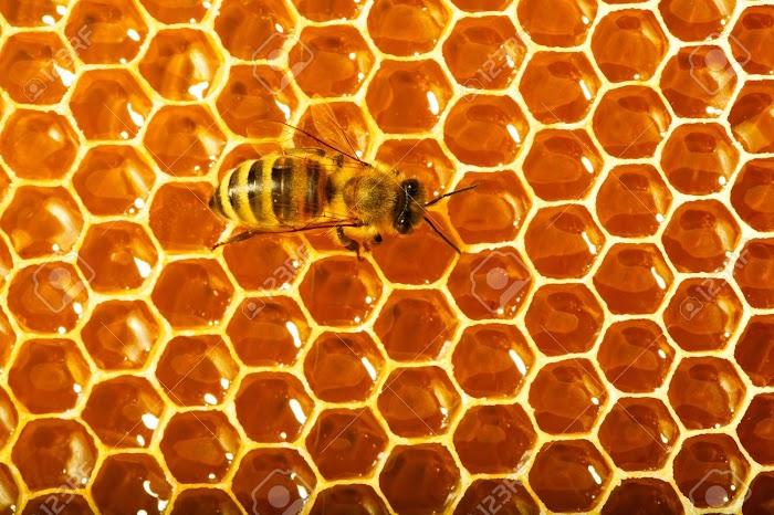 Arılar Peteklerini Neden Altıgen Yapar?