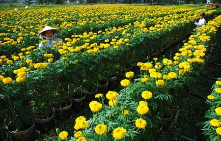 Ba Bo flower village