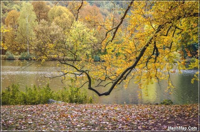 khung cảnh mùa thu thật đẹp