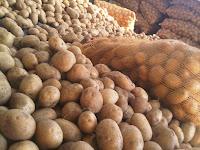 Gunakan Waring Sayur Untuk Pengemasan Pasca Panen Sayur & Buah