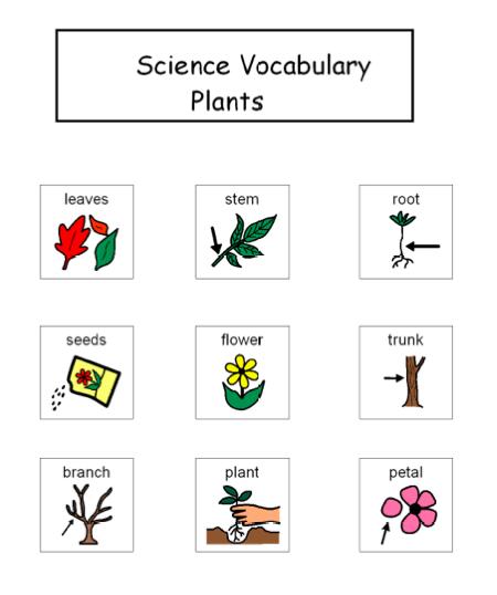 Autism Tank: Science Unit: Plants