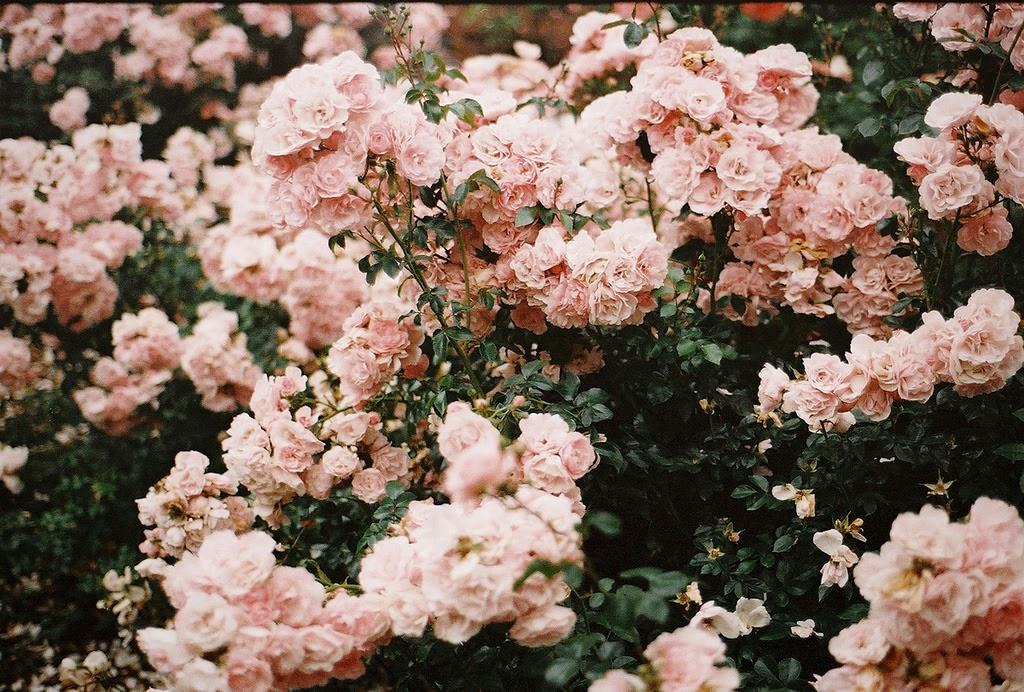 Tapeta Kwiaty Tumblr