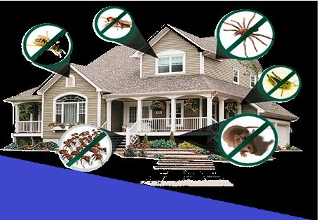 Dedetização de Ratos Desratização ⋆ Dedetizadora de cupins Descupinização ⋆ Formigas e Baratas ⋆ Desentupidora Esgoto 24h