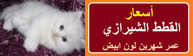 """""""اسعار القطط الشيرازي"""" """"اسعار القطط الشيرازى"""" """"اسعار القطط الشيرازي في مصر"""" """"اسعار القطط الشيرازى الصغيره"""" """"اسعار القطط الشيرازي 2021"""" """"اسعار القطط الشيرازي في سوق الجمعة"""" """"أسعار القطط الشيرازي البيضاء"""" """"اسعار القطط الشيرازية"""" """"اسعار القطط الشيرازى في السعودية"""" """"أسعار القطط الشيرازي الصغيرة في مصر 2021"""" """"اسعار القطط الشيرازي الامريكي"""" """"اسعار بيع القطط الشيرازى"""" """"اسعار القطط الشيرازى فى مصر"""" """"اسعار القطط الشيرازى فى مصر 2021"""" """"اسعار القطط الشيرازى الكبيرة"""" """"اسعار القطط الشيرازى البيور"""" """"اسعار القطط الشيرازى الهيمالايا"""" """"اسعار القطط الشيرازى فى مصر 2019"""" """"اسعار القطط الشيرازى في الاردن"""" """"اسعار القطط الشيرازى المون فيس فى مصر"""" """"أسعار القطط الشيرازي في مصر 2020"""" """"أسعار القطط الشيرازى في مصر 2019"""" """"اسعار قطط الشيرازي في مصر"""" """"سعر القطط الشيرازي في مصر"""" """"اسعار القطط الشيرازى مون فيس في مصر"""" """"اسعار القطط الشيرازى فى مصر 2012"""" """"اسعار القطط الشيرازى في مصر"""" """"أسعار القطط الشيرازي الصغيرة في مصر 2020"""" """"اسعار القطط الشيرازى الصغيرة فى مصر"""" """"اسعار القطط الشيرازي الصغيرة في مصر 2021"""" """"اسعار القطط السيامى الصغيرة فى مصر"""" """"كم سعر القطط الشيرازي الصغيره"""" """"اسعار القطط فى سوق الجمعة"""" """"سعر القطط في سوق الجمعة"""" """"اسعار القطط في سوق الجمعه"""" """"اسعار القطط شيرازي"""" """"اسعار القطط الشيرازيه في خميس مشيط"""" """"سعر القطط الشيرازية"""" """"اسعار القطط الشيرازى فى مصر 2020"""" """"سعر القطط الشيرازي في السعودية"""" """"اسعار قطط الشيرازي في السعوديه"""" """"سعر القط الشيرازي في السعودية"""" """"اسعار قطط شيرازي امريكي"""" """"سعر القطط الشيرازي"""" """"سعر القط الشيرازي الامريكي"""""""
