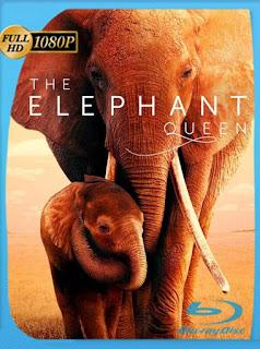 Reina de Elefantes (2019) HD [1080p] Latino [GoogleDrive] SilvestreHD