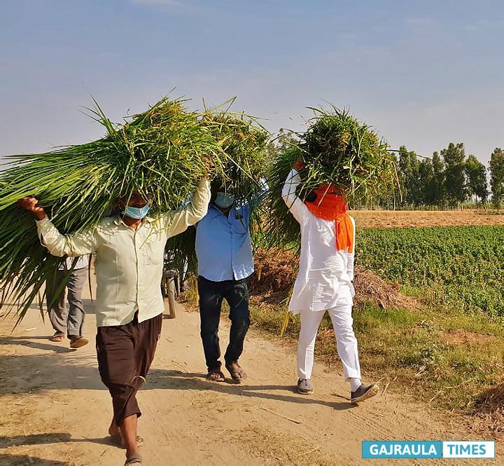 rajeev-tarara-in-field