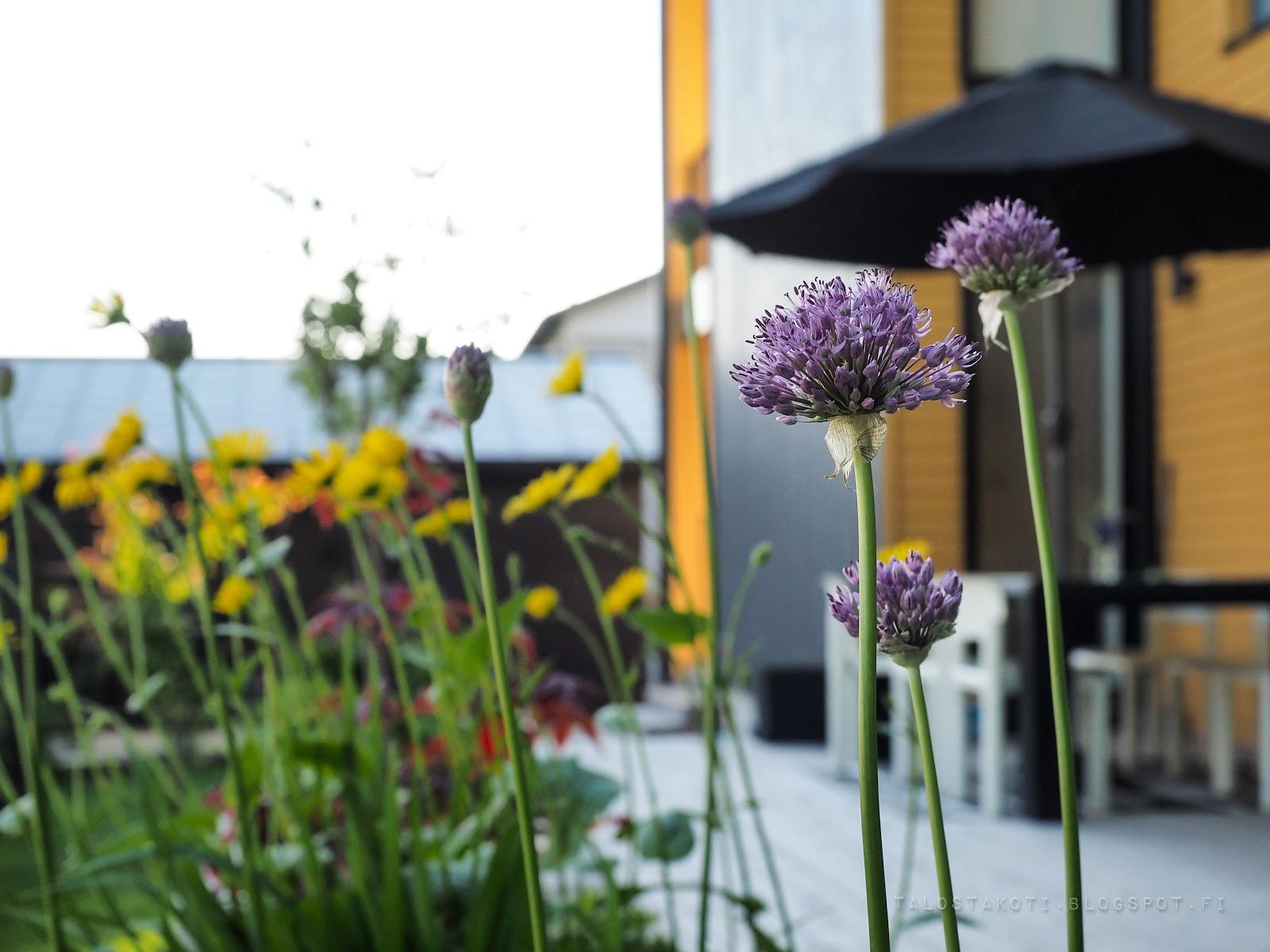 puutarha, kukkia, betoninen istutusallas