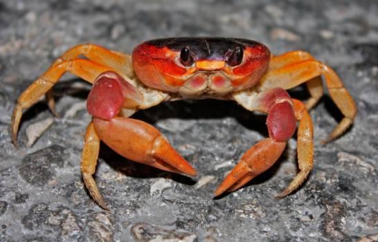 Desde marzo hasta junio está prohibida la captura y comercialización de cangrejos