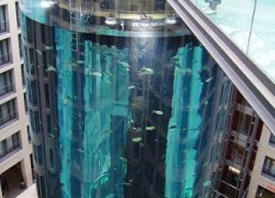 25 Inspirasi Desain Akuarium Ikan Hias Air Tawar