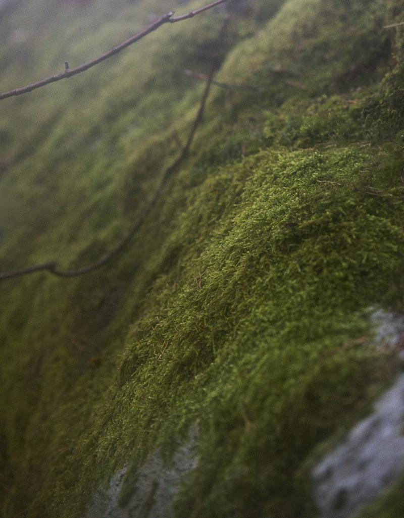 metsä, wood, nature, luonto, luontovalokuvaus, naturephotography, forest, finland, suomi, Visualaddict, valokuvaaja, Frida Steiner, sammal, moss