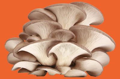 Chaga mushroom powder company in India