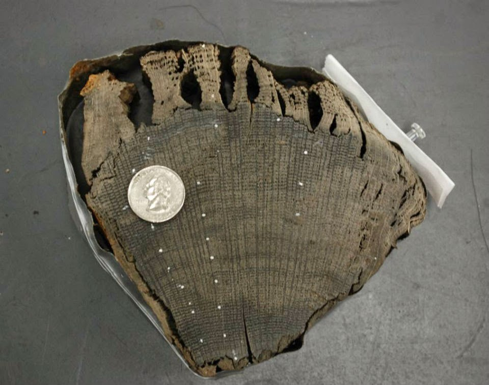 Tree rings reveal origins of mysterious World Trade Center ship