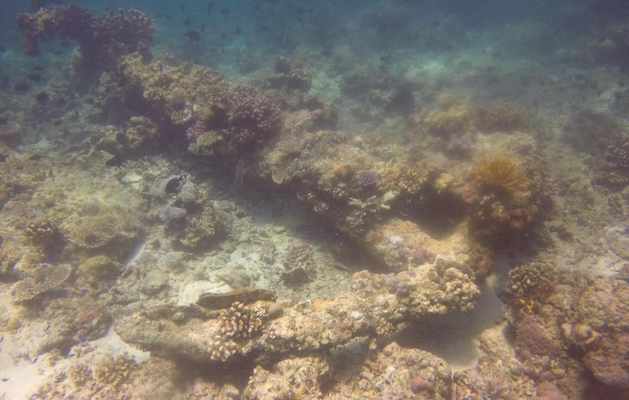 Ribuan Benda Harta Karun Diduga Peninggalan VOC Ditemukan Didasar Laut