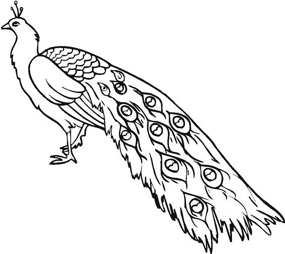 Sketsa gambar burung merah