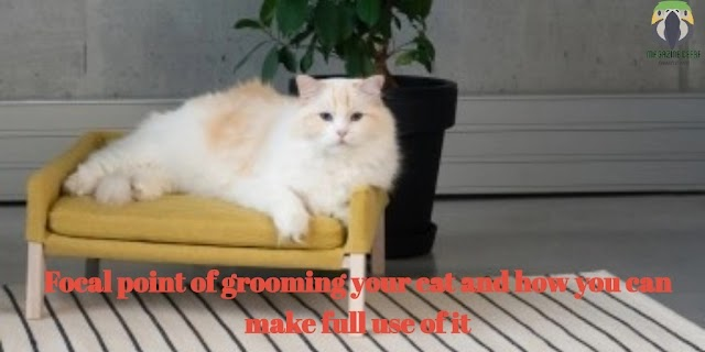 Focal points of grooming your cat and how you can make full use of It