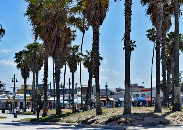 palm_trees_venice_beach