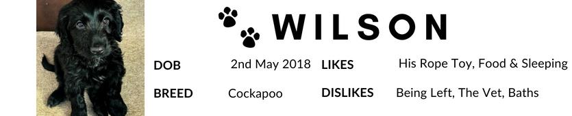 Wilsons Fact Sheet