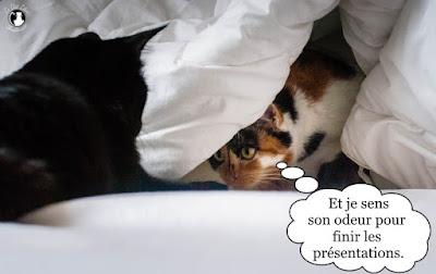 Deux chats qui font connaissance !