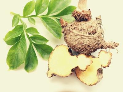 Thuốc giảm cân Glucomannan từ củ Khoai nưa