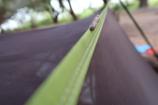 A caterpillar was just hanging out on our tent the next morning.