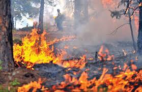 Kebakaran Hutan : Kasus Dan Cara Mengantisipasi
