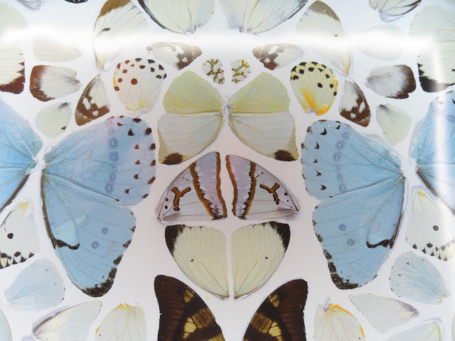hirst butterfly art