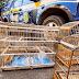 Policiais rodoviários federais resgatam aves silvestres mantidas em cativeiro na região de Itaberaba na Chapada Diamantina