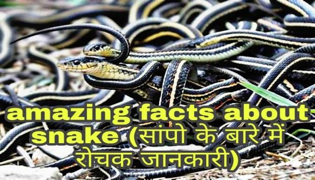 30+ Amazing facts about snake in hindi, सांपो के बारे में रोचक जानकारी।