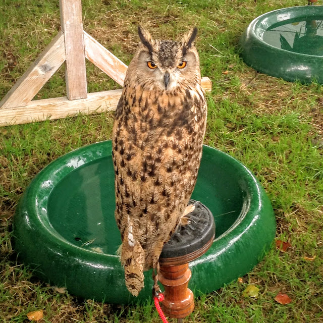 Bird of Prey at Chatsworth Country Fair 2016 Lifestyle, travel blog blogger