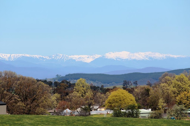 view of the Snowy Mountains from Chisholm Street Tumbarumba
