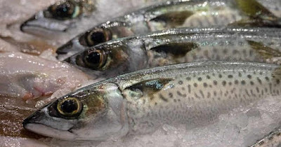 Pencegahan Pembusukan Pada Ikan