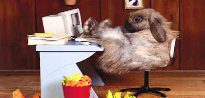Rabbit at work desk office