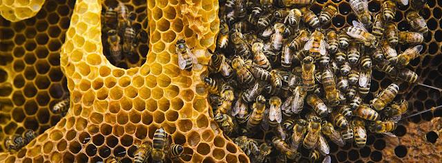 World Bee Day 2020