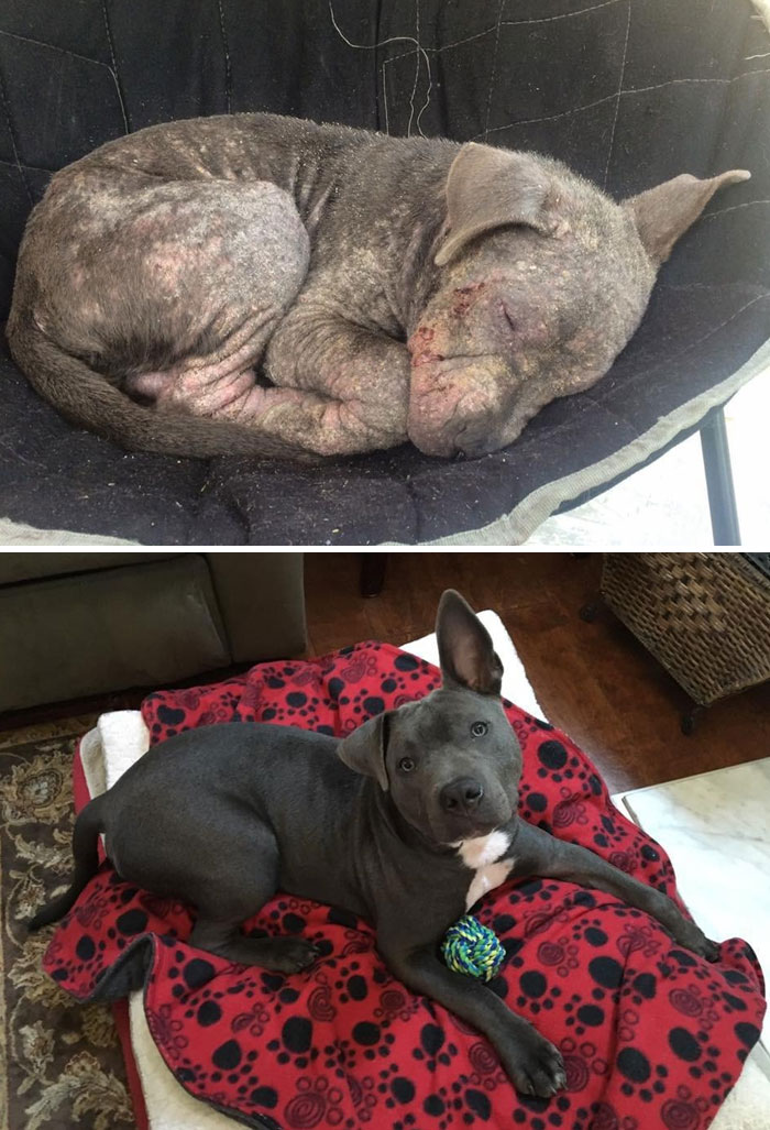 30 Heartwarming Before And After Pictures Of Dogs That Were Rescued And Finally Cared For