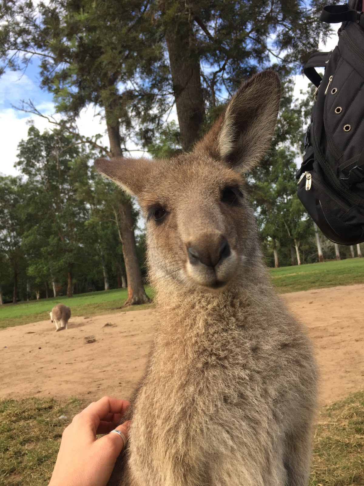 Travel Diary: Lone Pine Koala Sanctuary