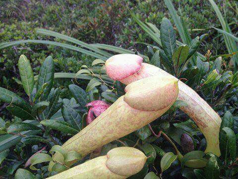 Check out the weird plant that went viral on Facebook