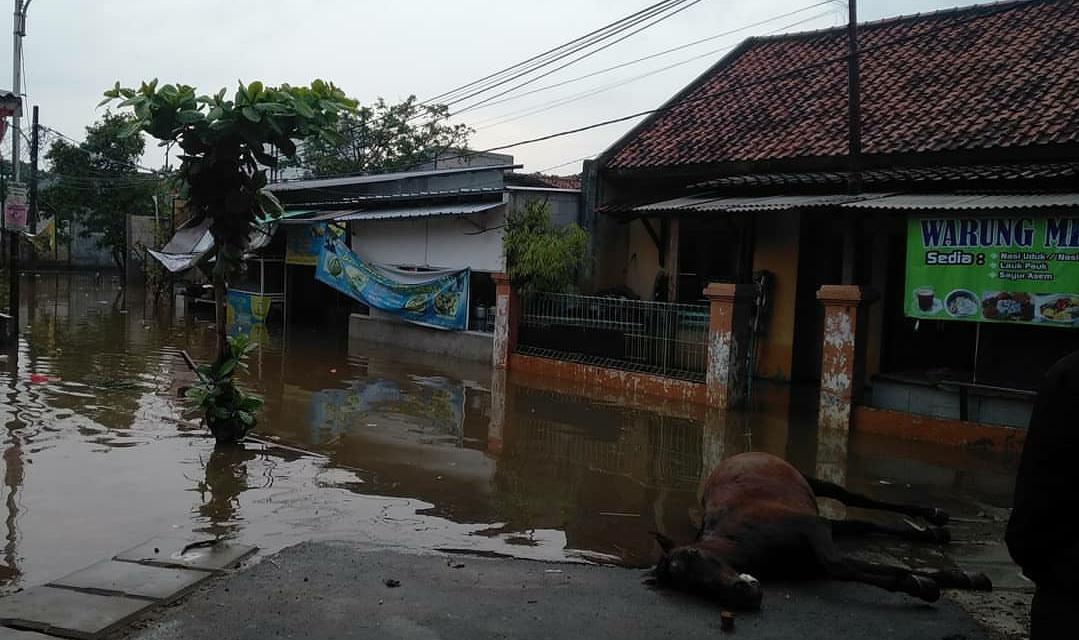 Kuda mati angkut mangsa banjir