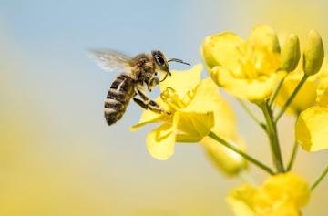 Pesticidas: Os governantes estão colapsando a biodiversidade