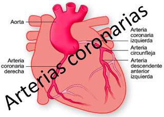 Cómo tener arterias coronarias saludables para no sufrir enfermedades por obesidad.