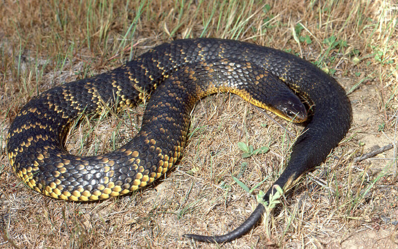 top 10 poisonous and deadliest snakes in the world