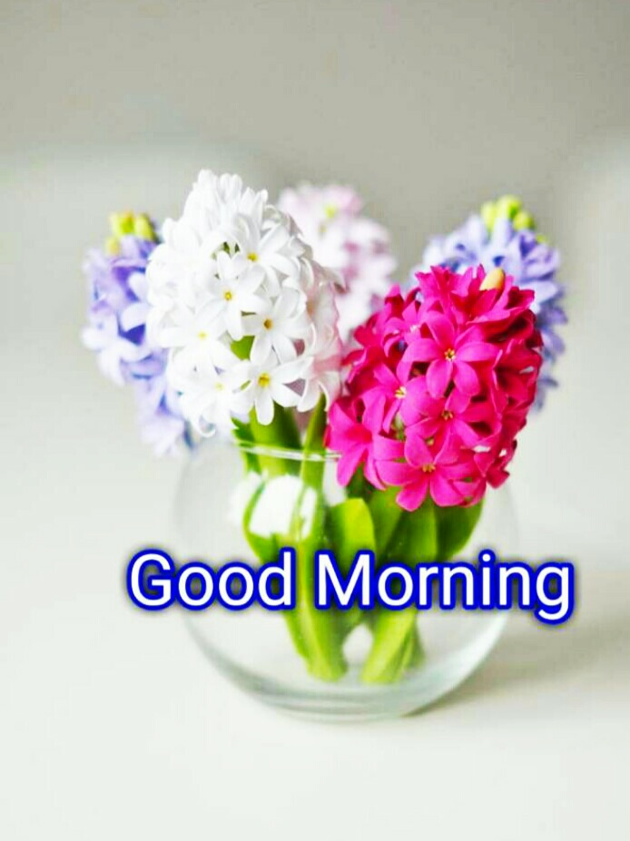 Good Morning Images For Whatsapp Beautiful Good Morning Images For Whatsapp Good Morning Shayari Mixing Images