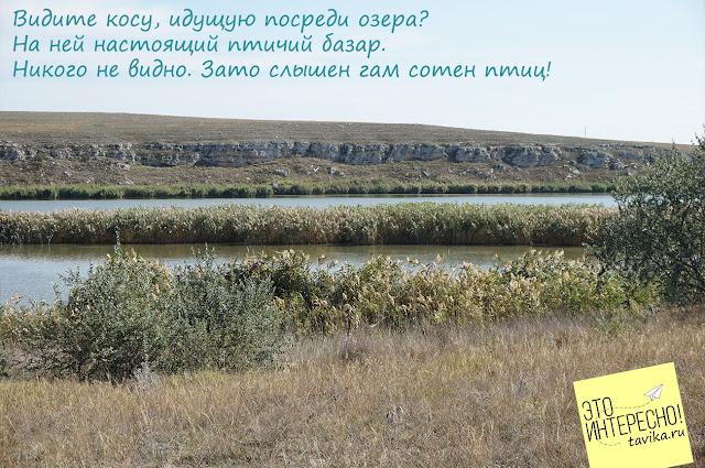 Птицы Донузлава