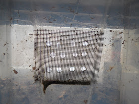 worm bin composting vermicomposting