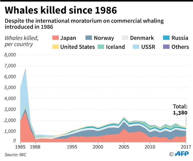 Whales targeted by Japan face extinction threat