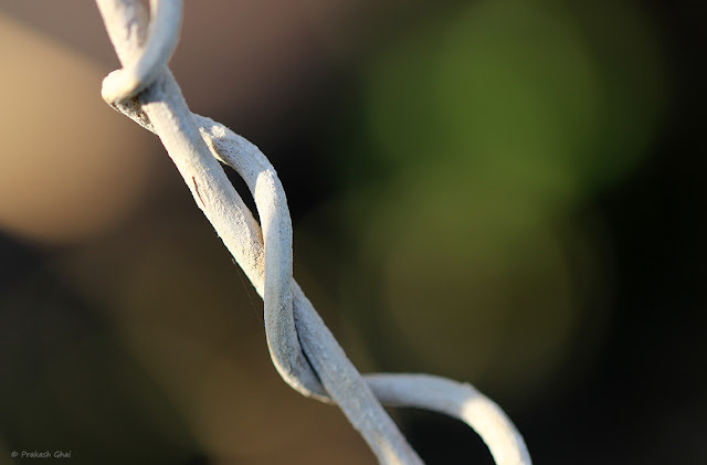 A Macro Minimalist Picture of Two Entangled Dry White Twigs.