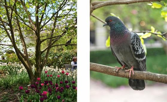 Jardin du Palais Royal med duer og overvældende blomstrende bede