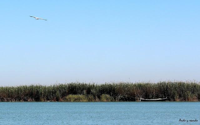 Barcas en la Laguna de la Albufera