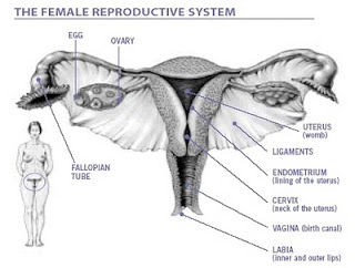 adalah  penyakit kanker yang terjadi pada kawasan  leher rahim KANKER SERVIKS