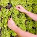 Grow veggies on your walls: Vertical Field makes Indoor farming possible