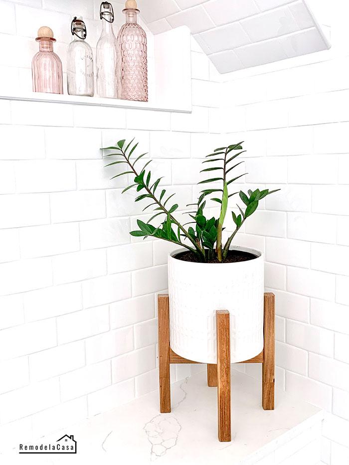 ZZ plant in bathroom